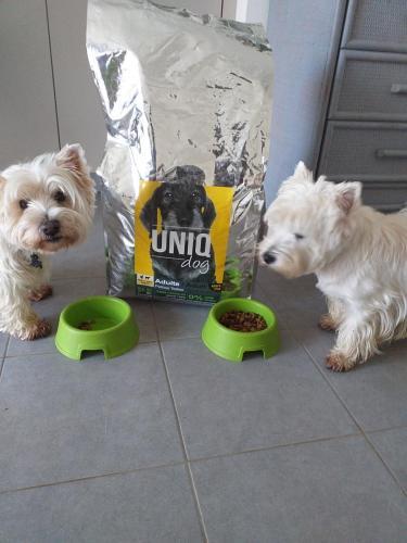 Chiens avec croquettes UNIQ Dog petites tailles.