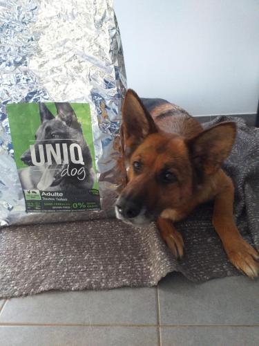 Chien avec croquettes UNIQ Dog toutes viandes