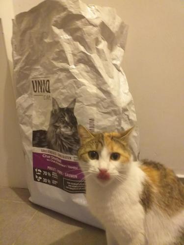 Chat avec croquettes UNIQ Cat chat stérilisé.