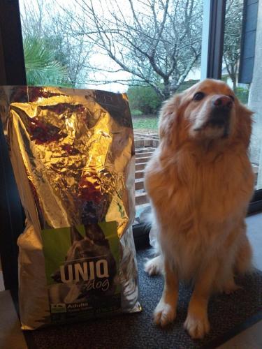 Chien avec croquettes UNIQ Dog toutes viandes.