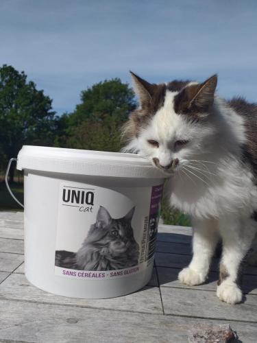 Chat avec croquettes UNIQ Cat chat stérilisé