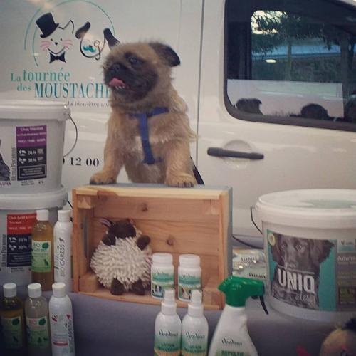 Chien avec produits UNIQ Dog, UNIQ Cat et Verlina.
